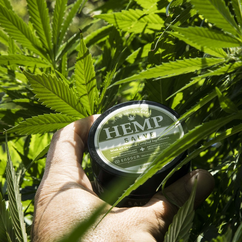 Uncovering The Astounding Potential for High CBD Hemp